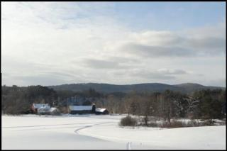 Lyme in winter, snowing ground with trees